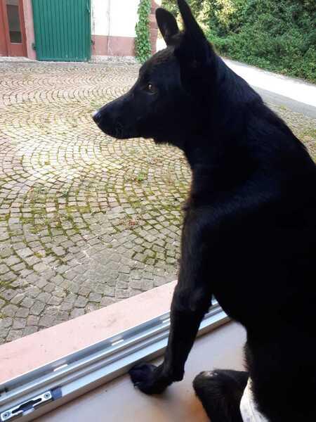 Hundemenschen kennenlernen