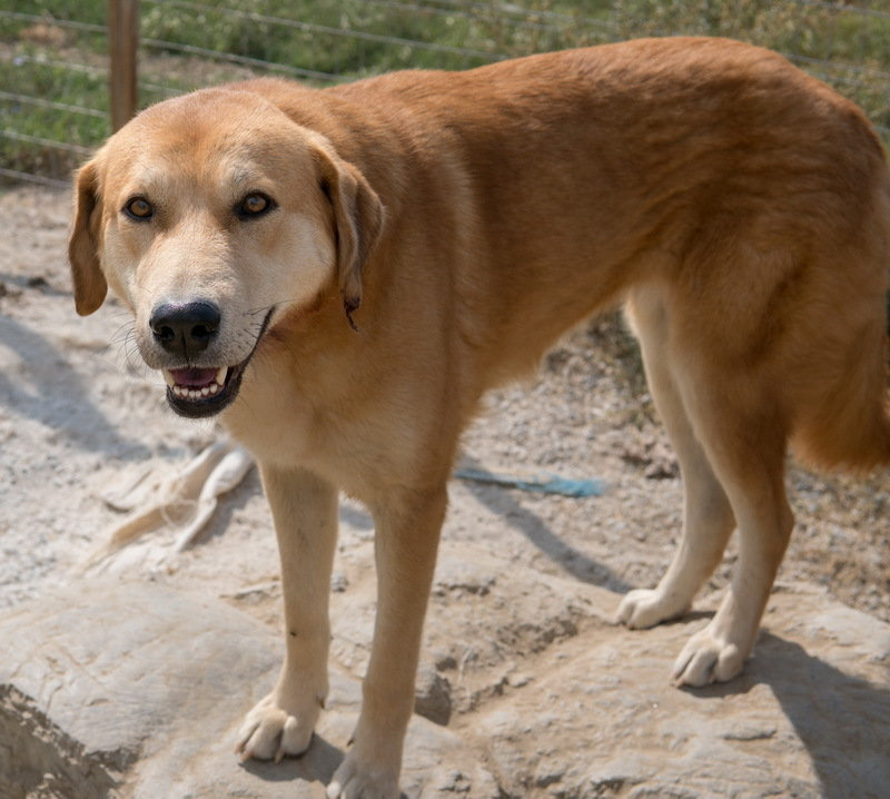 Tierheim hund kennenlernen