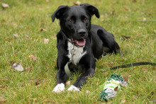 NEO, Hund, Border Collie-Labrador-Mix in Neuhausen - Bild 6