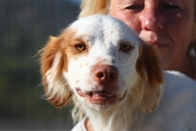 PILO, Hund, Irish Setter-Mix in Italien - Bild 1