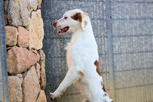 PILO, Hund, Irish Setter-Mix in Italien - Bild 10