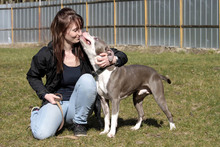 JOKER, Hund, American Staffordshire Terrier-Mix in Neuhausen - Bild 9