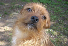 JOHN, Hund, Terrier-Mix in Griesheim - Bild 1