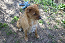 JOHN, Hund, Terrier-Mix in Griesheim - Bild 10