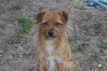 JOHN, Hund, Terrier-Mix in Griesheim - Bild 11