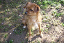 JOHN, Hund, Terrier-Mix in Griesheim - Bild 12