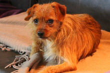 JOHN, Hund, Terrier-Mix in Griesheim - Bild 13
