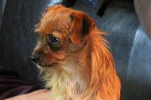 JOHN, Hund, Terrier-Mix in Griesheim - Bild 14