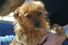 JOHN, Hund, Terrier-Mix in Griesheim - Bild 15