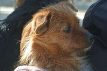 JOHN, Hund, Terrier-Mix in Griesheim - Bild 19