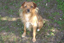 JOHN, Hund, Terrier-Mix in Griesheim - Bild 2