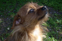 JOHN, Hund, Terrier-Mix in Griesheim - Bild 3