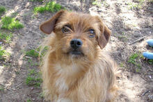 JOHN, Hund, Terrier-Mix in Griesheim - Bild 5