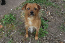 JOHN, Hund, Terrier-Mix in Griesheim - Bild 6