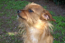 JOHN, Hund, Terrier-Mix in Griesheim - Bild 7
