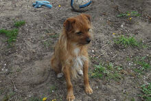 JOHN, Hund, Terrier-Mix in Griesheim - Bild 8