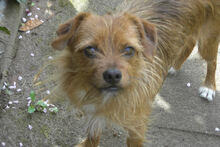 JOHN, Hund, Terrier-Mix in Griesheim - Bild 9