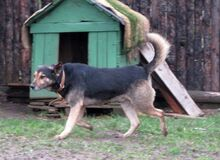 BROWNIE, Hund, Mischlingshund in Bulgarien - Bild 16