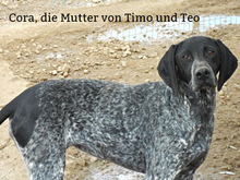 TIMO, Hund, Deutsch Kurzhaar-Mix in Spanien - Bild 9