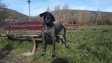 TOBYJONI, Hund, Pointer in Spanien - Bild 6