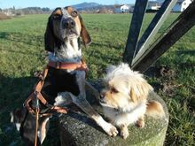 BOB2, Hund, Pointer-Mix in Zypern - Bild 10