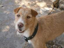 QUIDAM, Hund, Podenco-Mix in Spanien - Bild 2
