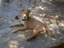 QUIDAM, Hund, Podenco-Mix in Spanien - Bild 8