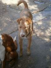 QUIDAM, Hund, Podenco-Mix in Spanien - Bild 9