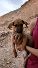 DESIREE, Hund, Mischlingshund in Spanien - Bild 5
