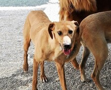 OIBIA, Hund, Windhund-Mix in Italien - Bild 5