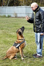 PAUL, Hund, Deutsche Dogge-Mix in Neuhausen - Bild 4