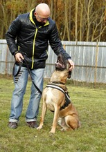 PAUL, Hund, Deutsche Dogge-Mix in Neuhausen - Bild 5