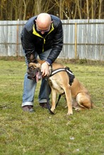 PAUL, Hund, Deutsche Dogge-Mix in Neuhausen - Bild 6