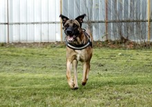 PAUL, Hund, Deutsche Dogge-Mix in Neuhausen - Bild 7