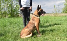 LETTIE, Hund, Malinois-Mix in Lindau - Bild 14