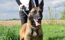 LETTIE, Hund, Malinois-Mix in Lindau - Bild 9