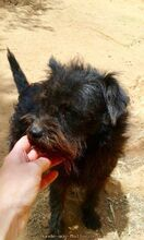 CHE, Hund, Terrier-Mix in Morsbach - Bild 12