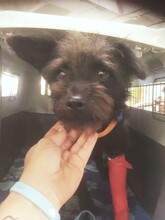 CHE, Hund, Terrier-Mix in Morsbach - Bild 2