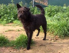 CHE, Hund, Terrier-Mix in Morsbach - Bild 9