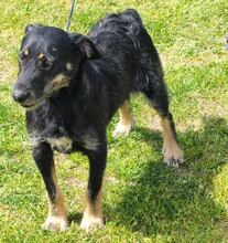 BARNEY1, Hund, Terrier-Mix in Kroatien - Bild 2