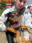 MOLLY, Hund, Pinscher-Mix in Ungarn - Bild 2