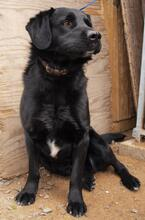 HUGO, Hund, Labrador-Mix in Slowakische Republik - Bild 3
