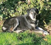 Mischlingshund Hermine Aus Welver