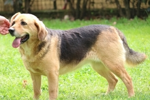 FIORENZE, Hund, Beagle-Mix in Italien - Bild 2