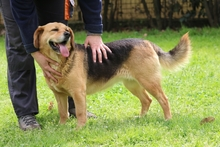 FIORENZE, Hund, Beagle-Mix in Italien - Bild 3