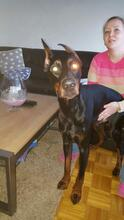 SPIKE, Hund, Dobermann in Herne - Bild 9