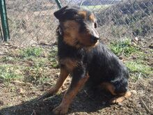 TOI, Hund, Terrier-Mix in Spanien - Bild 4