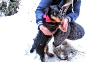 HETTY, Hund, Jagdterrier-Mix in Ungarn - Bild 2