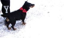 HETTY, Hund, Jagdterrier-Mix in Ungarn - Bild 5