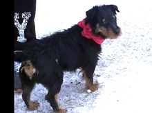 HETTY, Hund, Jagdterrier-Mix in Ungarn - Bild 6